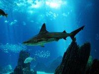 Descubre la fauna bajo el mar