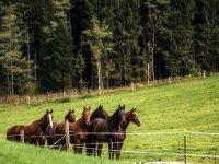 caballos preparados