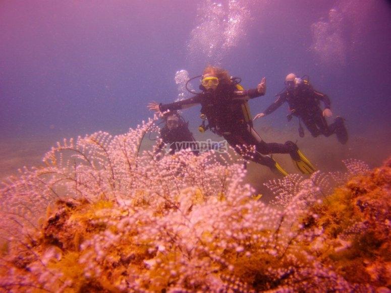 兰萨罗特岛的第一次潜水体验