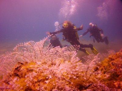 潜水课程Scuba Diver,来自Tías的PADI