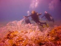Experiencia de buceo Scuba Diver