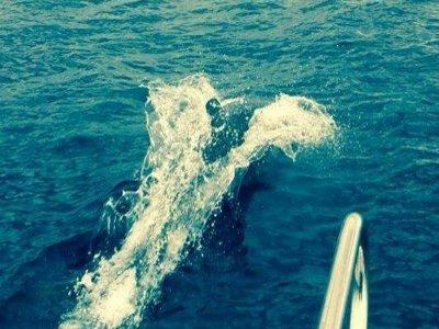 Getari Charter Avistamiento de Cetáceos