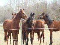 Ven a conocer a nuestros caballos