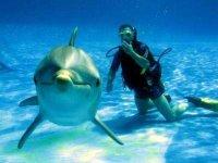 Buceador con delfin