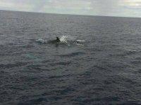 Delfin frente a nosotros