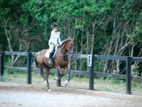 Galloping tended