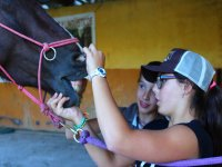 Looking at the denture of the equine