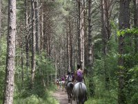 Going through the trees with the horses