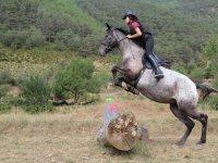 Jumping the trunk on horseback
