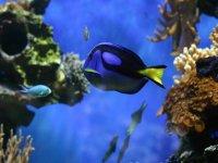 Entre peces en las profundidades