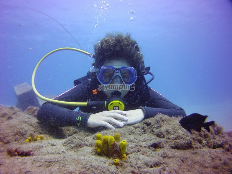 在兰萨罗特岛潜水潜水