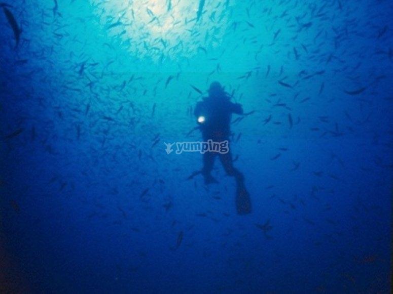 享受潜水潜水的最佳价格