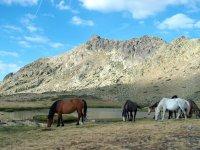 瓜达拉马天然石材野马