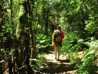 Senderismo por zona boscosa