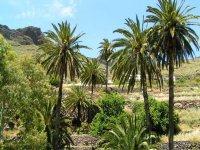 Palmeras en el Parque Nacional de Garajonay