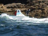 Barche trasportate da cirripedi