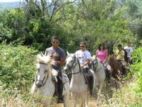 Horse riding among pine woods