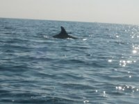 海上接近海豚