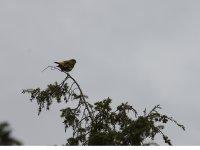 Excursiones Ornitologicas