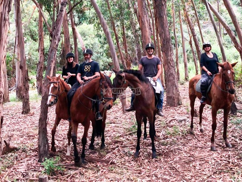 Horse tour in groups