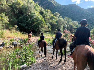 Horse riding tour around Marbella, 2 hours