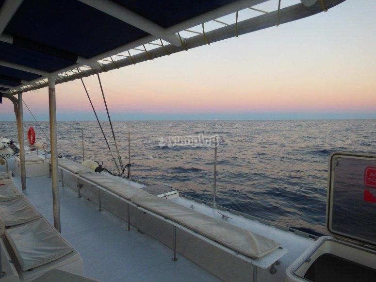 Disfrutando de alta mar