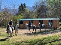 Caballos en Cáceres