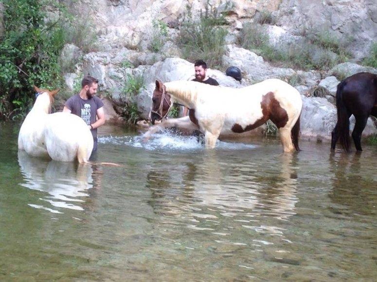 Cavalli fare il bagno