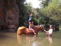 Corso di equitazione naturale, bagno con cavalli e percorso