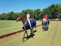 Riding lessons for any level