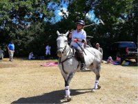 About the horse with the polo team