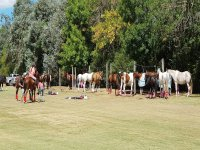 Horses in a natural and comfortable environment