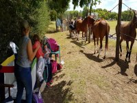 Enjoying a day with horses