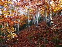 跋涉休息美丽的森林