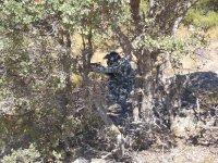 树枝彩弹为雄鹿之间隐藏