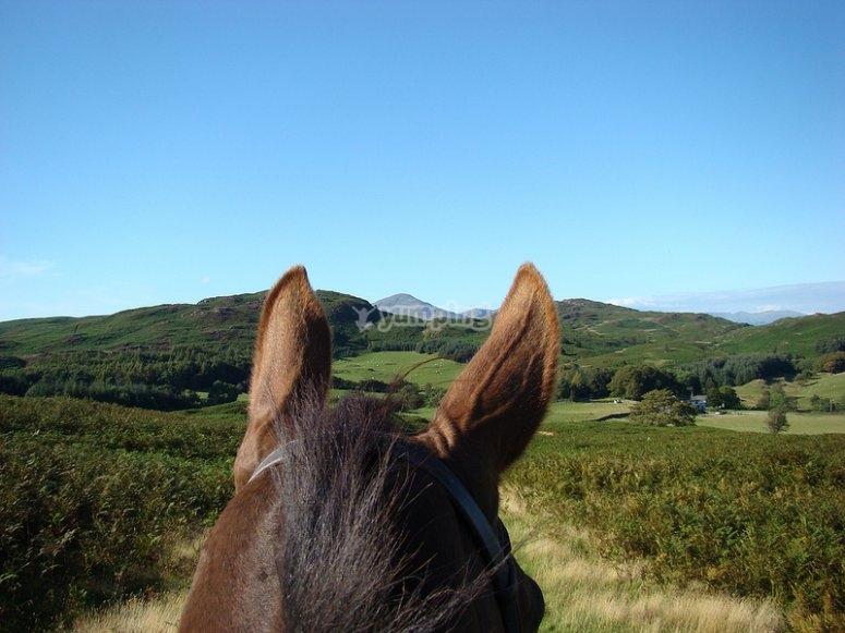 Ruta a caballo en el campamento