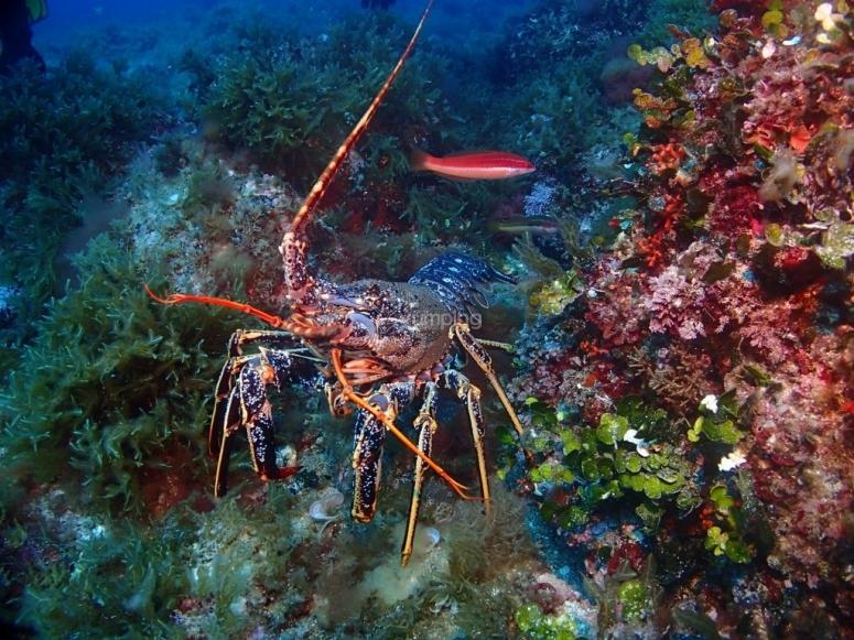 Descubre las profundidades del mar