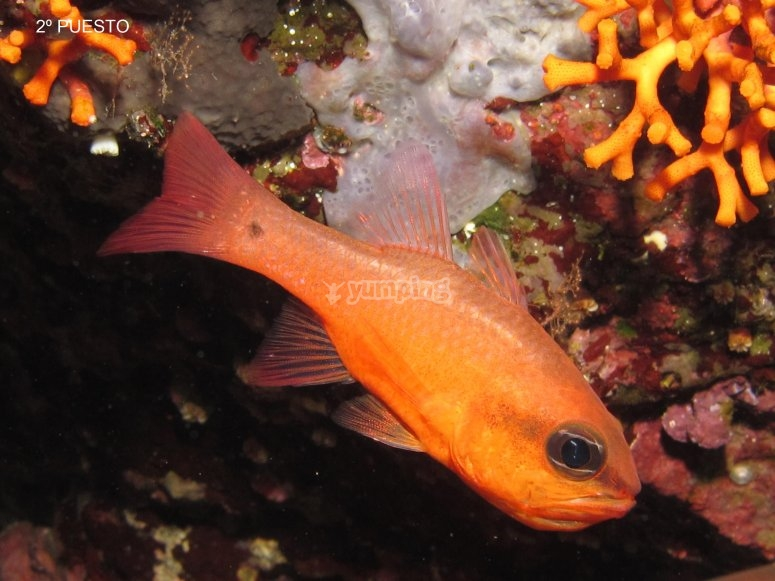 Buceo islas columbrete