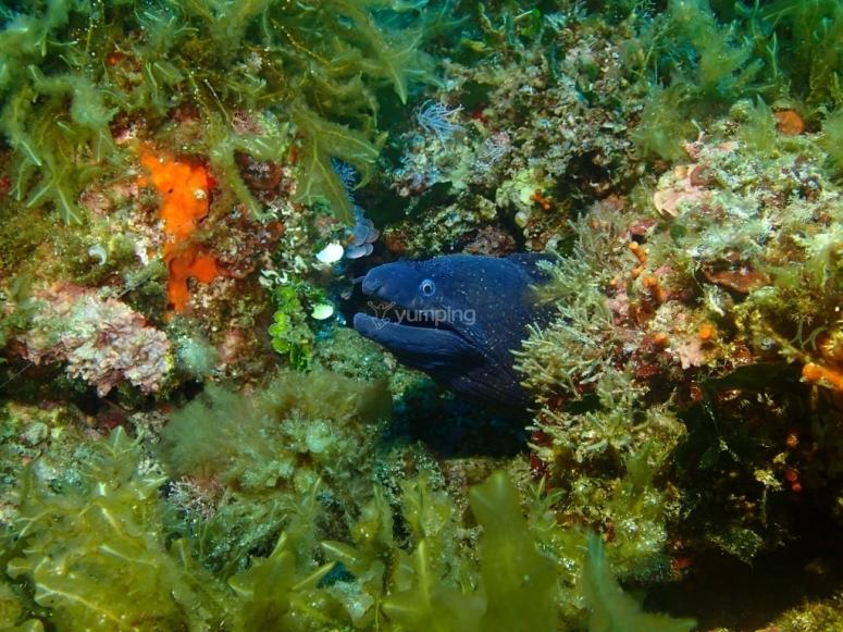 Vistas del fondo del mar