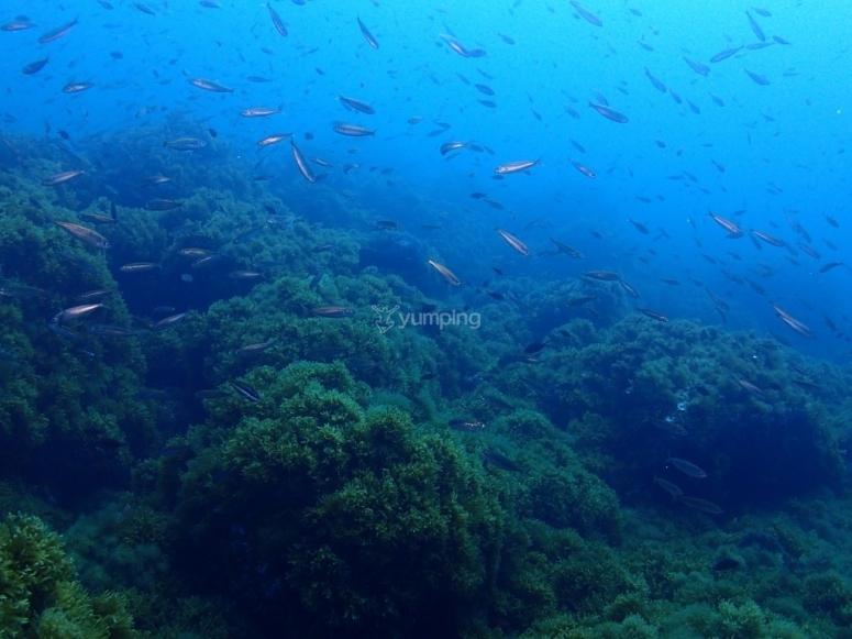 Vistas bajo el agua