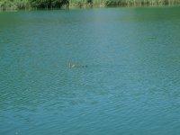 Las lagunas con patos