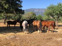 Our horses relaxing