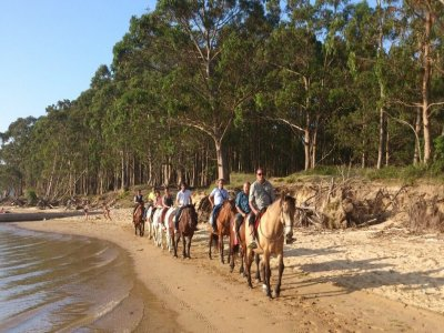 90 min horse riding beach and forest in Regsaón