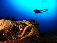 跳水的海星