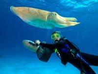 Seascooter junto al calamar