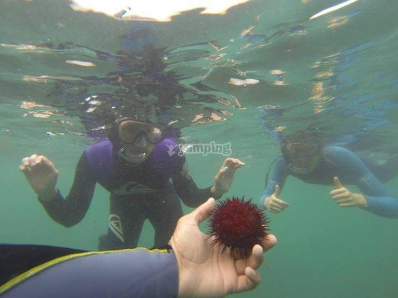 Veremos erizos de mar
