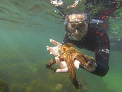 带导游的浮潜游览距离Ris海滩有2小时的路程