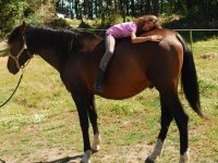 Lying hugging the horse