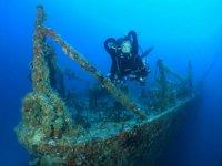 沉船覆盖着海洋生物