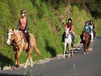Ruta con los caballos en tramo de carretera